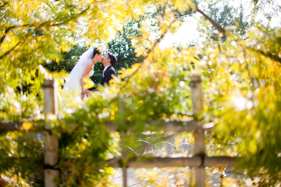 Eric amy earl burns miller japanese garden wedding for Csulb japanese garden koi pond