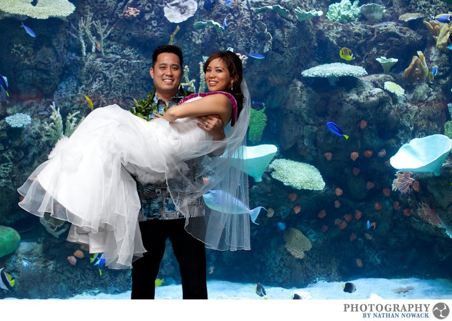 aquarium aquarium of the pacific cerritos cerritos library wedding dancing fish wedding hawaiian leis jellyfish long beach reception